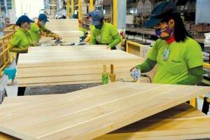 Анализ деревообрабатывающей промышленности Вьетнама: возможности и проблемы