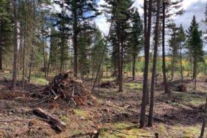 Правительство Британской Колумбии выделит $27 млн для оптимизации использования древесного сырья