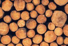 Финляндия: падение цен на круглый лес в октябре