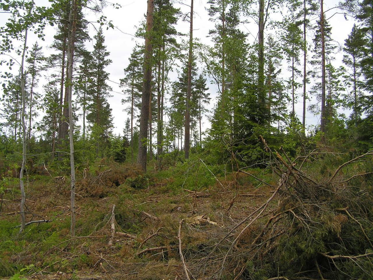 Шведский опыт регулирования лесопользования