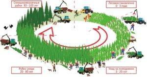 Об интенсификации лесопользования и внедрении современных технологий на лесозаготовках (ретро)