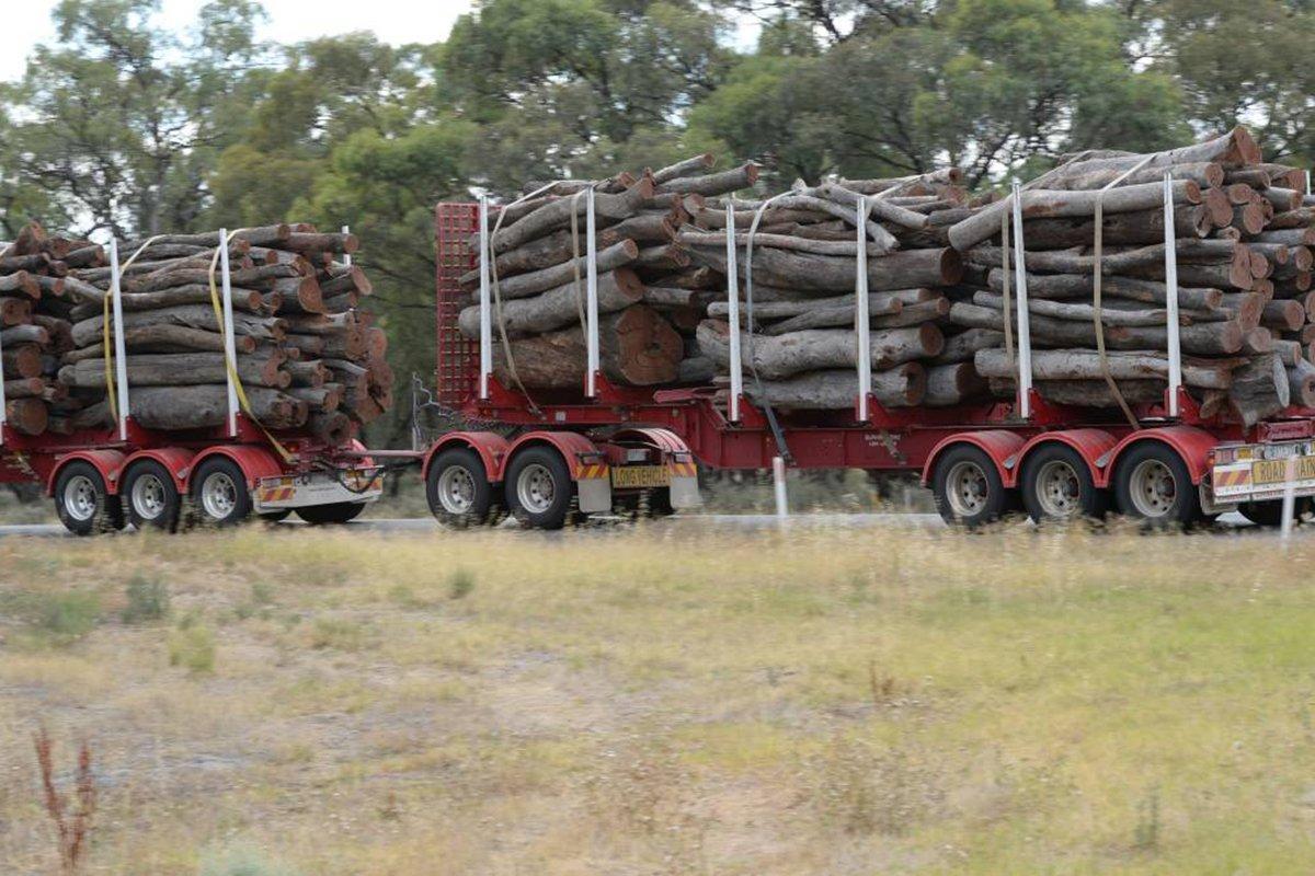 Виктория прекратит вырубку местных лесов