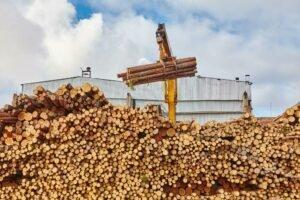 Экспорт круглого леса упал на 15%