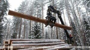 Почти 3,5 млн куб.м древесины реализовано на годовых биржевых торгах