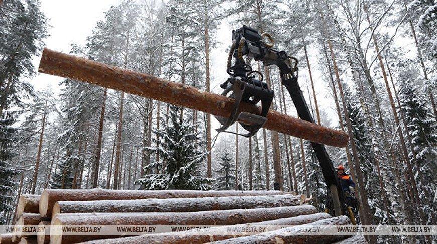 You are currently viewing Почти 3,5 млн куб.м древесины реализовано на годовых биржевых торгах
