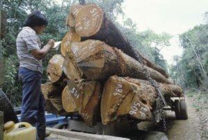 Производство древесной продукции достигло в мире наивысшего уровня роста за последние 70 лет — ФАО