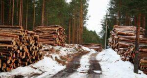 На Рівненщині ліс продали через аукціон