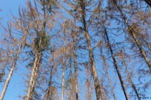 В Германии учёные заботятся о предотвращении исчезновения лесов