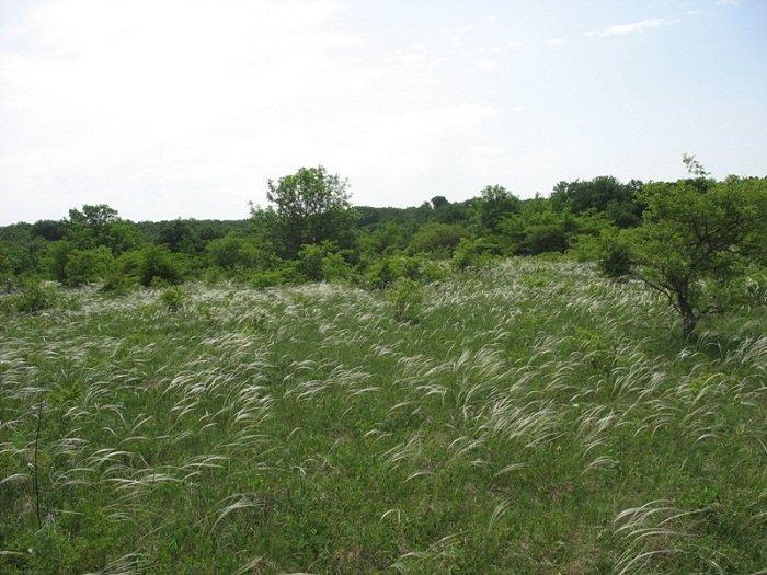 Селянські ліси: сучасні проблеми в дзеркалі реформи земельних відносин