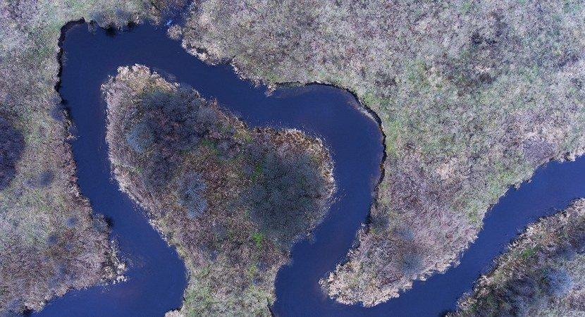 Они хотят в Беловежской пуще удерживать больше воды