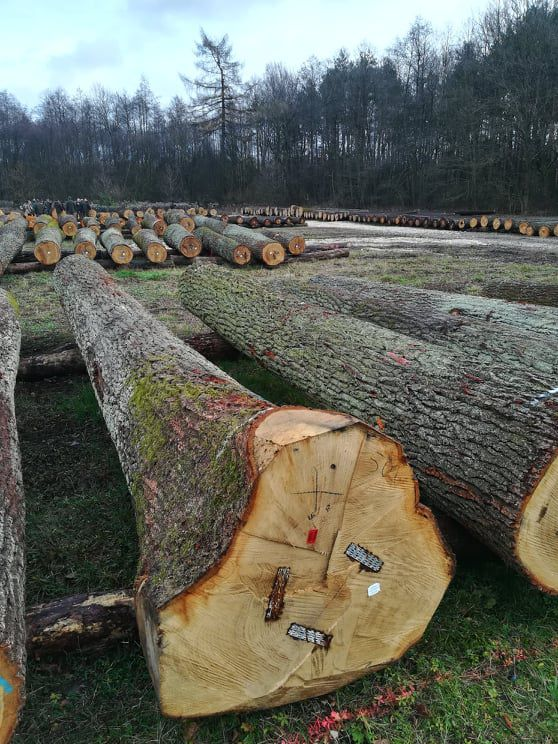 Польша: Результаты аукциона ценной древесины в Радоме
