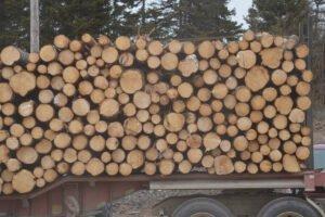 Проект лесной стратегии Онтарио по увеличению использования древесины, снижению бремени регулирования