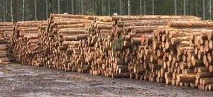 Цены на древесину в Эстонии падают, поскольку экономика остывает