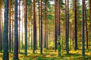 В Институте природных ресурсов Финляндии рассказали о росте лесных запасов