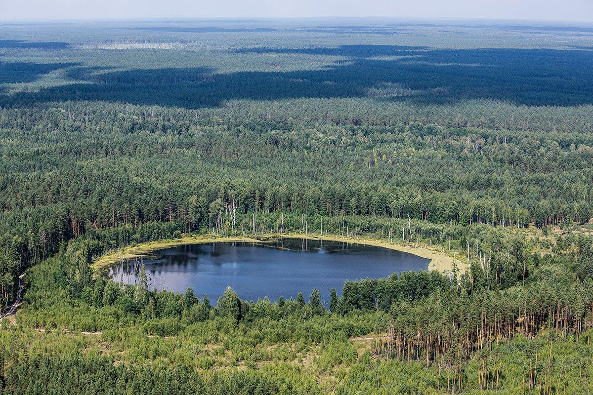 В России разработают новую структуру управления лесной отраслью