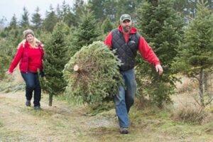Как финансовый кризис ударил по рождественской елочной индустрии и поднял цены