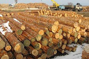 РФ: «Порядок определения сортиментного состава заготовляемой древесины» Проект