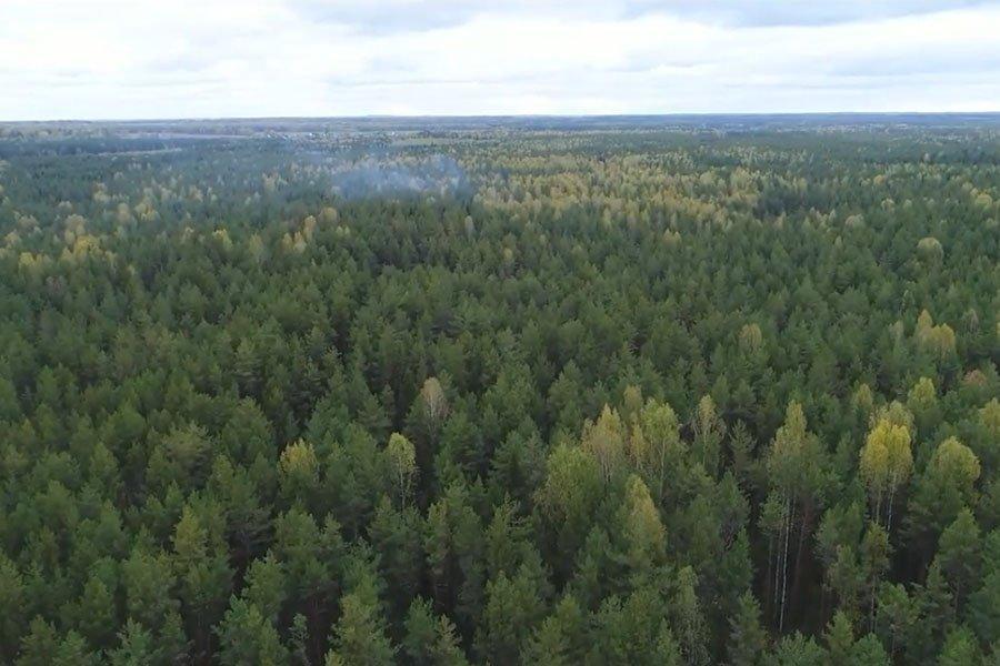 Кировские власти не хотят отдавать лес крупному бизнесу