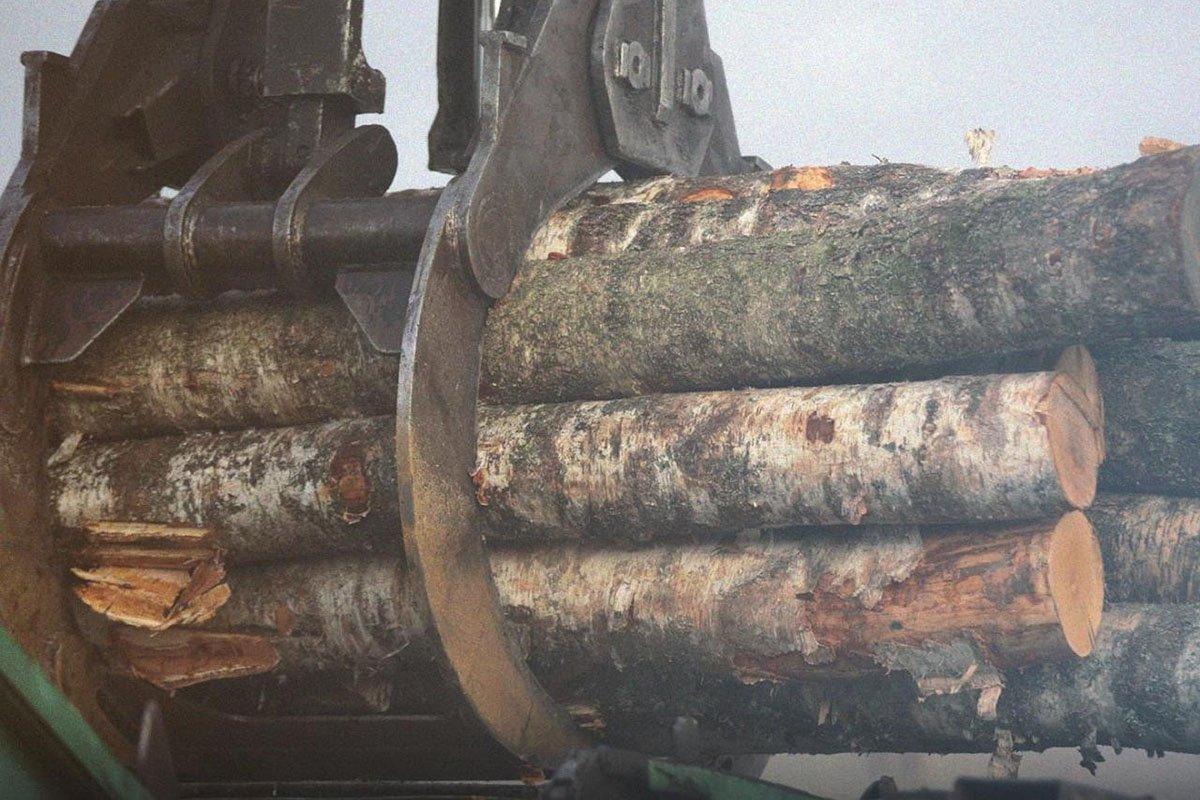 В Финляндии сокращаются объемы лесозаготовки