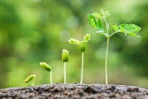 В Финляндии создадут Международный центр знаний о биоэкономике