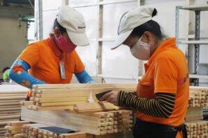 Вьетнам: экспорт древесины увеличивается благодаря иностранным инвестициям