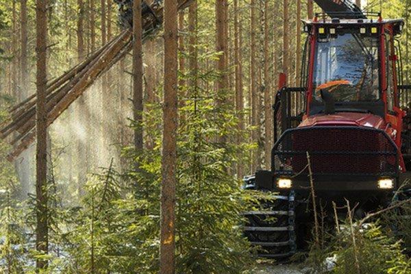 В Швеции показатель площади к окончательной рубке снизился, несмотря на большие повреждения, нанесённые короедом