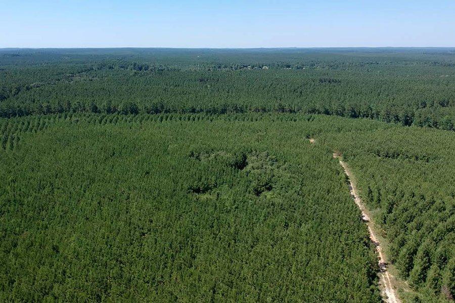 Molpus Woodlands Group приобрела 35 тыс. га леса на юге США