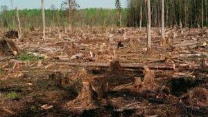 «Звук пилы не утихает»: Кто зарабатывает миллиарды на продаже сибирской тайги за бесценок в Китай?