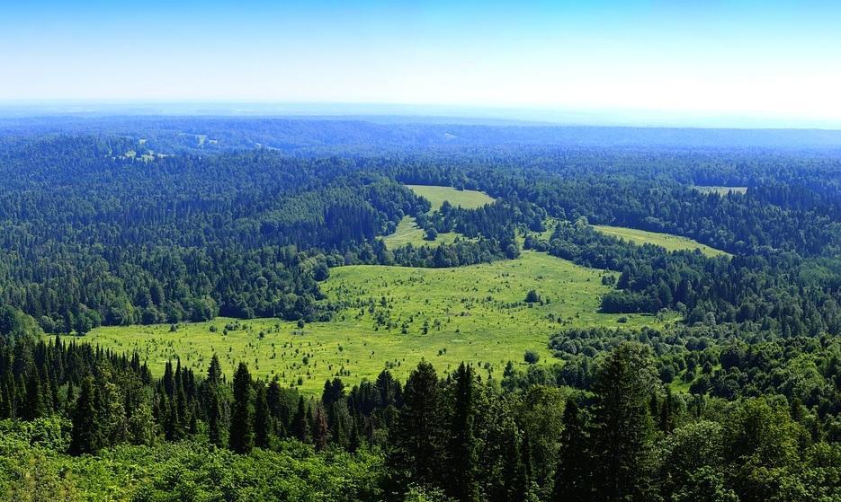 Полпредство ПФО: Пермская система «Умный лес» решит вопросы лесной отрасли России