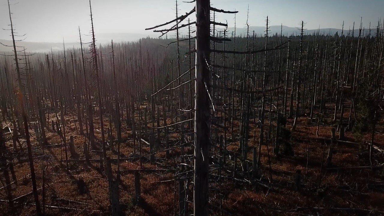 Лес без границ (видео)