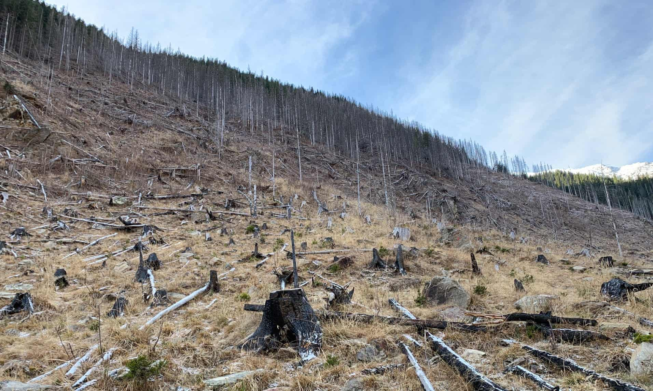 Насилие усиливается, по мере того как правительство Румынии усиливает давление на лесную мафию