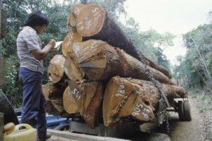 Производство древесной продукции достигло в мире наивысшего уровня роста за последние 70 лет