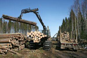Лесная отрасль России оказалась в кризисной ситуации из-за аномально теплой погоды