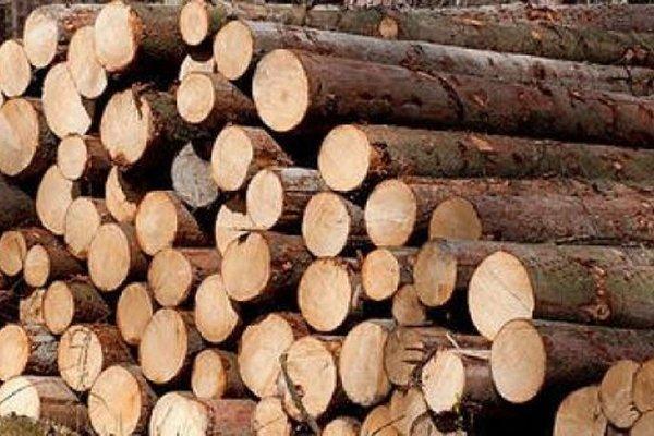 Китайский рынок круглого леса серьезно пострадал от кризиса с короедами в Европе