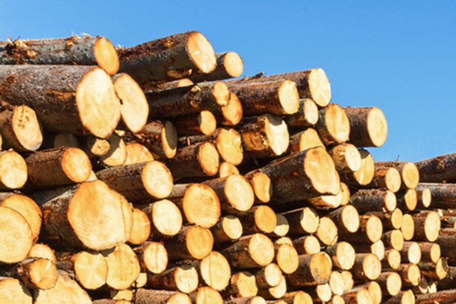 Цены на круглый лес в Швеции продолжали расти в течение 2019 года
