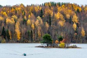 Россия наслаждается новой «деревянной лихорадкой», а Китай подпитывает бум пиломатериалов (The Telegraph, Великобритания)