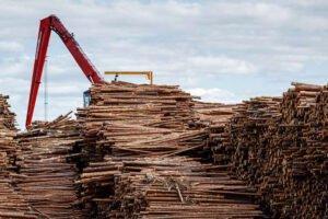 Лесное хозяйство Финляндии парализовано забастовками
