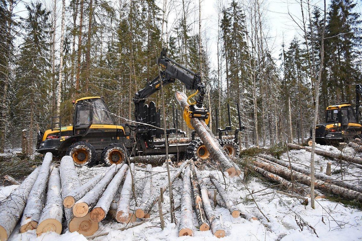 Дальний Восток России: огромные запасы древесины недостаточно освоены