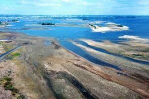 Массовые посадки лесов привели к обмелению рек