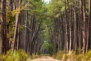 Французская лесная индустрия не использует растущие леса