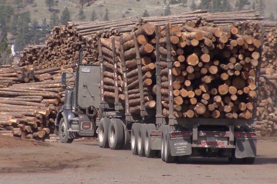 Многочисленные проблемы усугубляют кризис лесной промышленности в Британской Колумбии