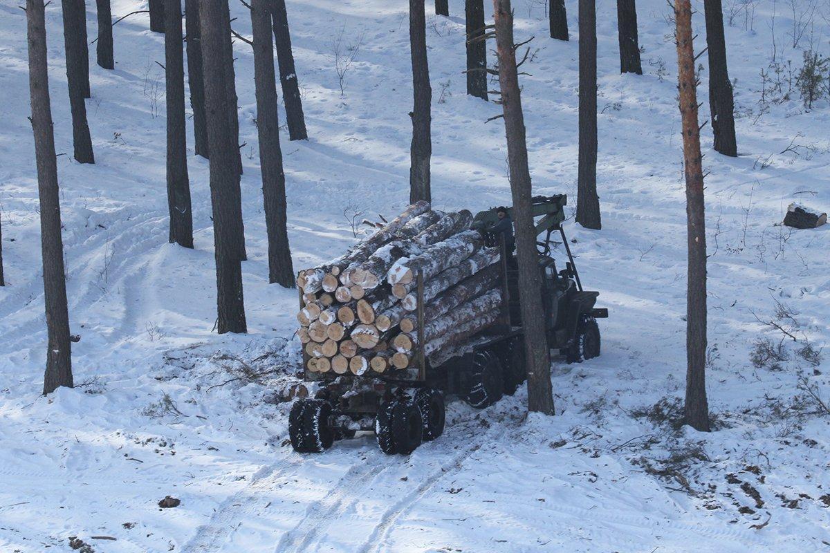 Кабмин ужесточил контроль за потреблением древесины в Украине