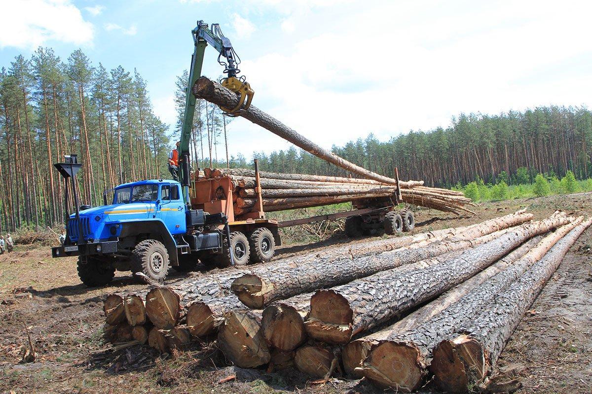 В Украине появится онлайн-карта вырубки леса