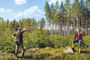 В 2019 г. в Финляндии объем торгов древесиной, заготовленной внутри страны, снизился на 29%