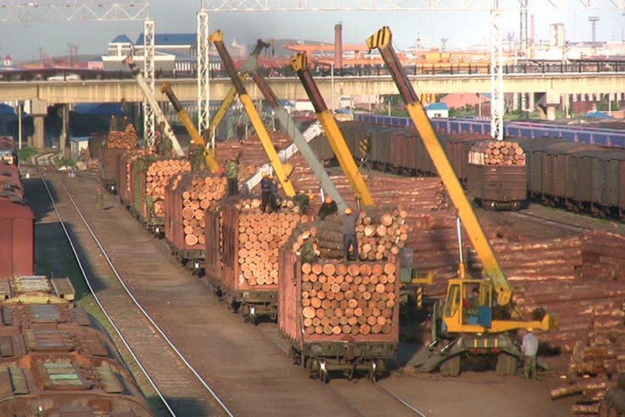 Экспортные цены на круглый лес в Новой Зеландии в декабре выросли