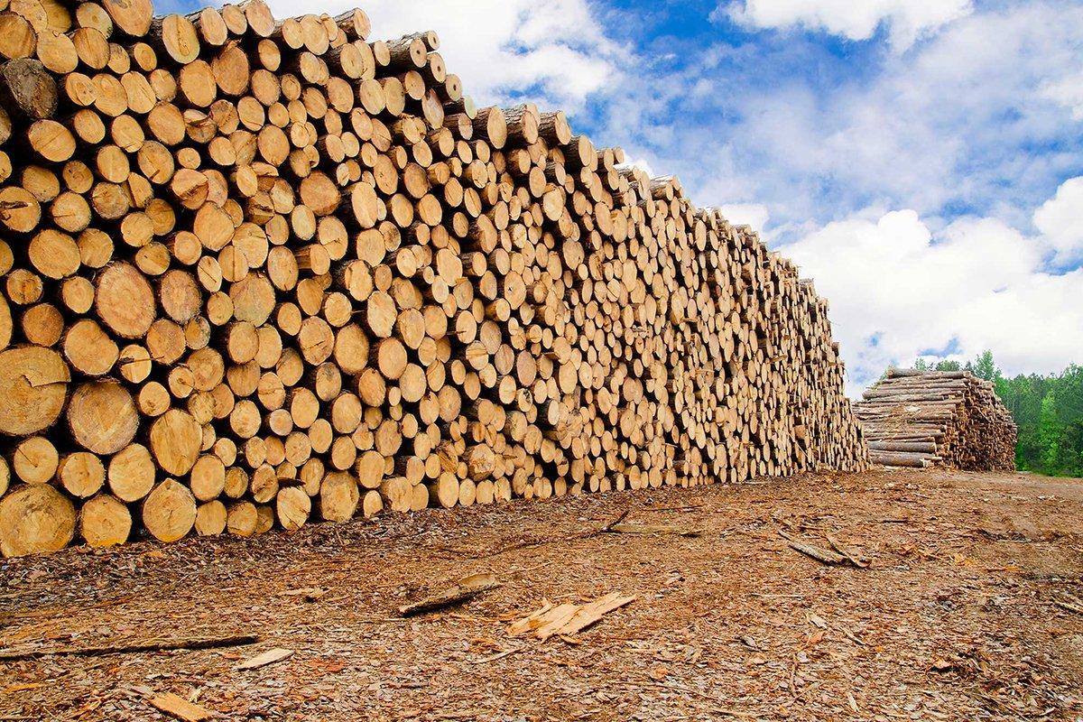 Китай, похоже, окончательно решает проблему нелегальной древесины и лесозаготовок