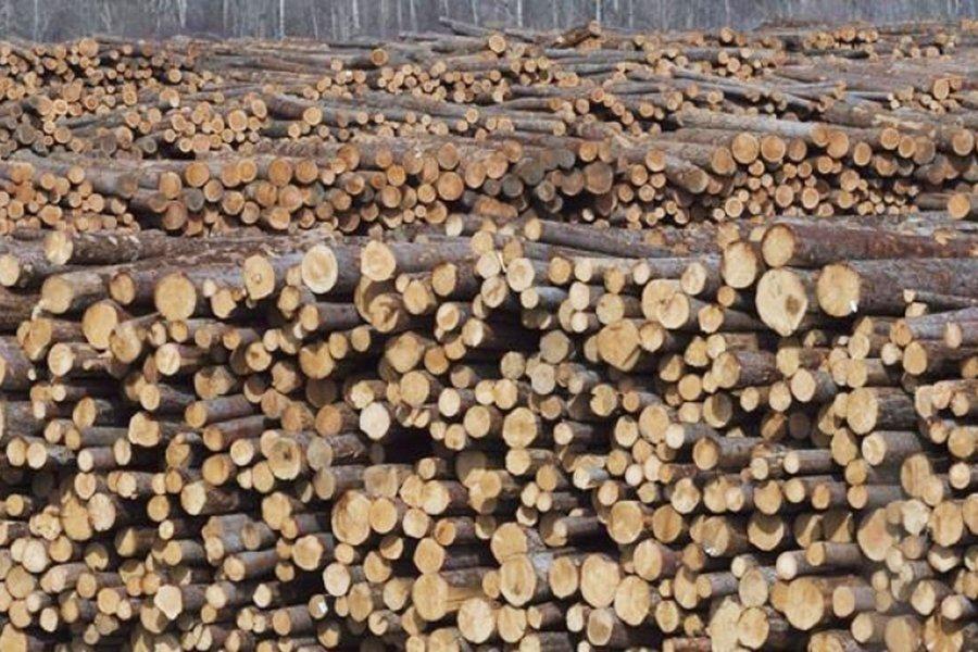 Вырубка леса в Норвегии впервые превышает 11 млн м³