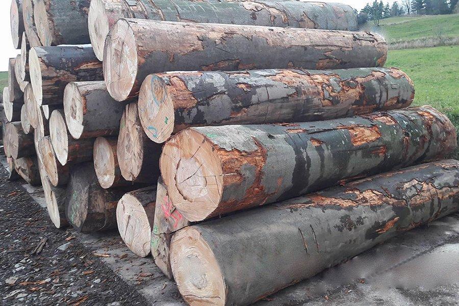 Read more about the article Ухудшение рынка и проблемы с поставками европейской лиственной древесины