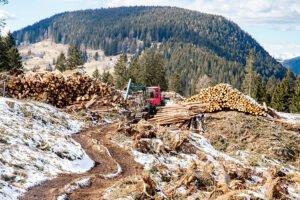 Счетная палата РФ: в России нет достоверной информации об объеме заготовки, оборота и экспорта лесоматериалов