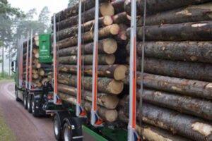 Швеция: Södra корректирует цены на балансовую древесину из-за избыточного предложения
